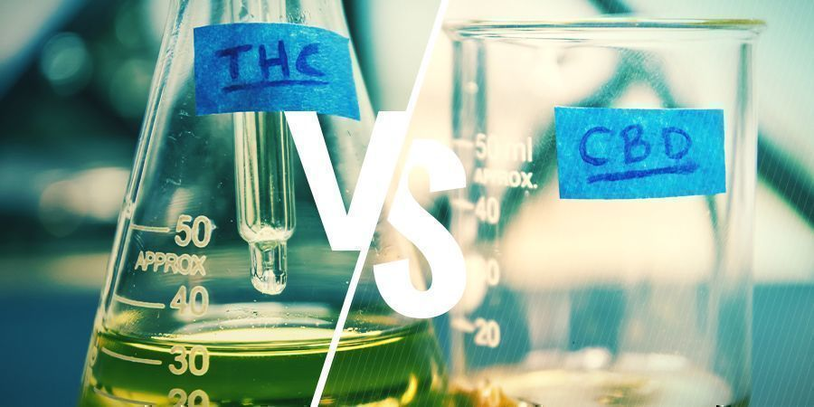 The Benefits Of Different CBD:THC Ratios - Zamnesia Blog