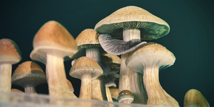How Safe Is Psilocybin?