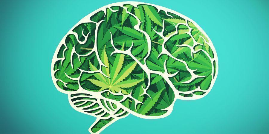 Das Cannabis-Erlebnis Verständlich Machen