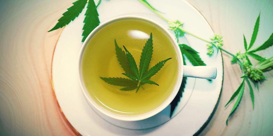 Cannabisstängeln: Tee