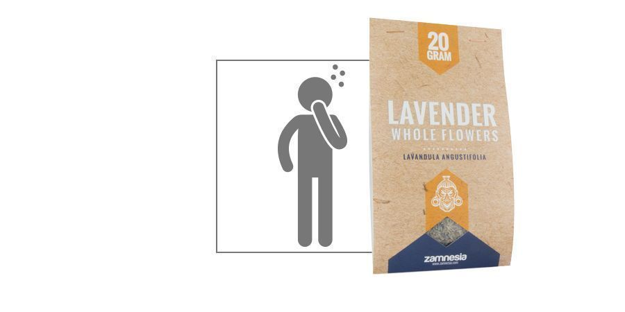 lavender - Lavendula angustifolia