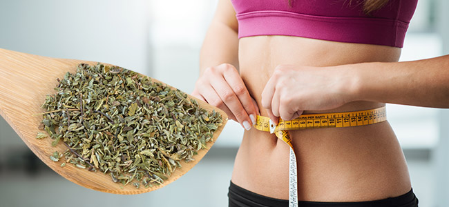 provigil vs adderall for weight loss