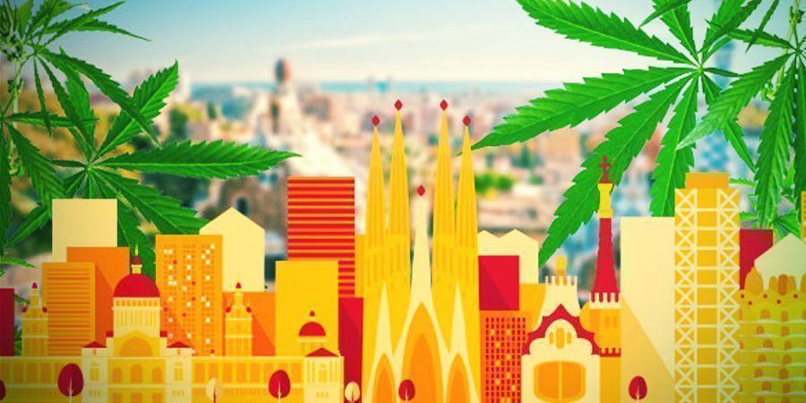 Auf Der Suche Nach Dem Besten Cannabis Im Land