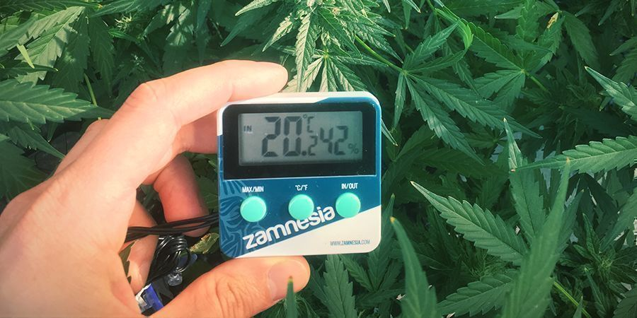Prevent Stretching Weed Plants: Keep Temperature in Check