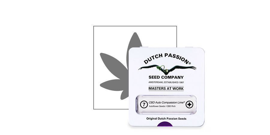 CBD Auto Compassion Lime (Dutch Passion)