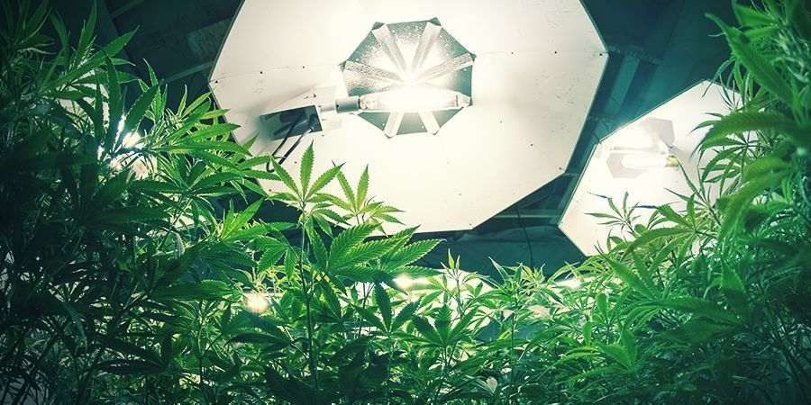 Cannabis Beleuchtung Und Wurzel Ph-Wert
