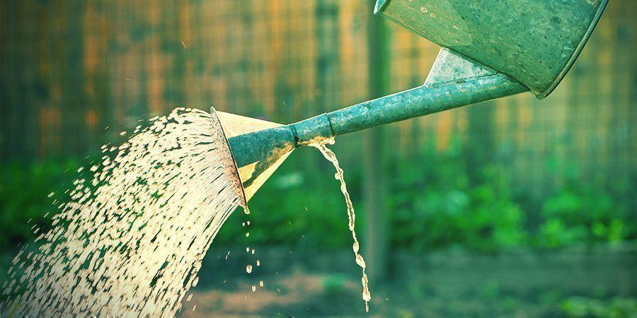 Führe Die Richtigen Dünger Und Wassermengen Zu