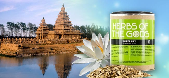 Herbs Of The Gods White Lotus