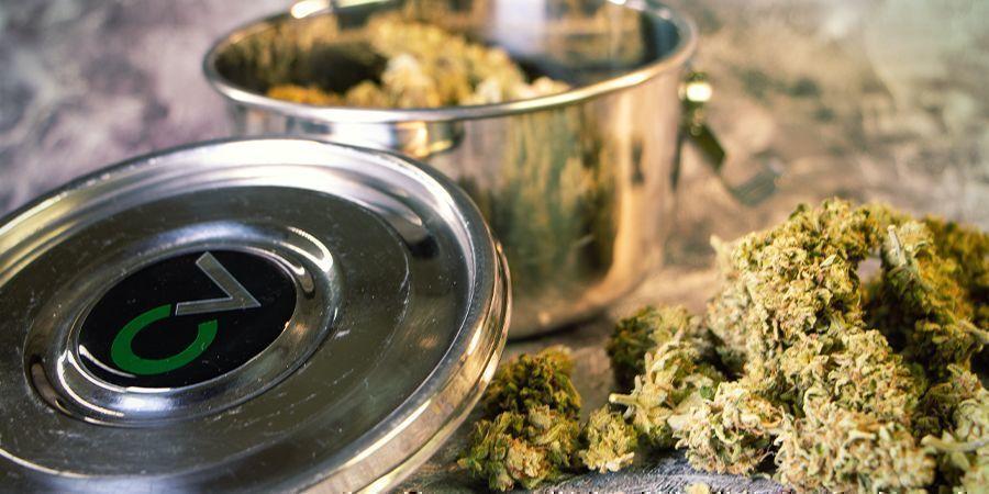 Cannabisblüten rehydrieren: Cannabis-Befeuchter