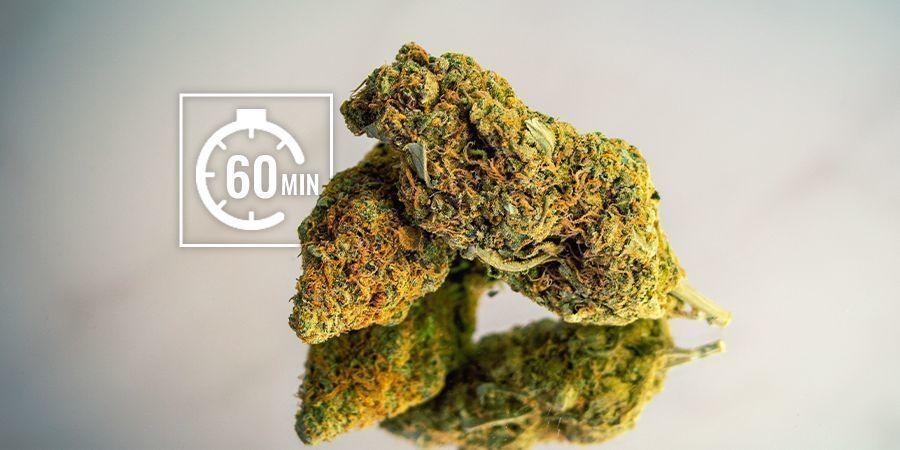Cannabisblüten rehydrieren: Kurzfristig (Stunden)
