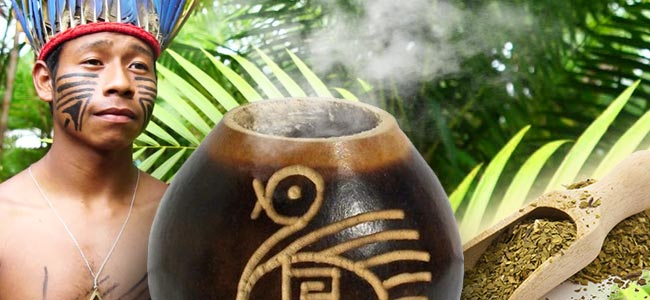 The Early History Of Yerba Mate