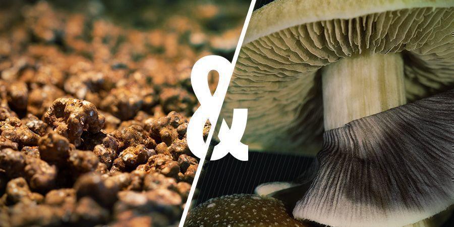 Similarities Magic Mushrooms and Magic Truffles