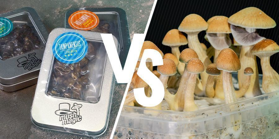 Difference Between Truffles and Magic Mushrooms