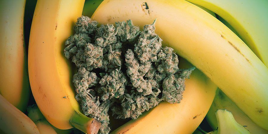Die Herkunft Von Banana