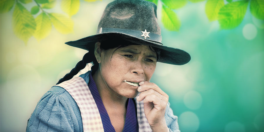 How To Take Kanna: Snorting vs  Smoking vs  Chewing - Zamnesia Blog