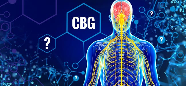 Effects of CBG