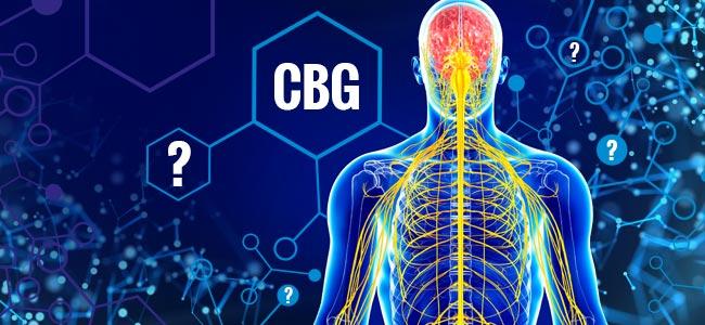 Effects of CBG