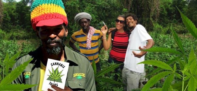 MARIJUANAS FUTURE PROSPECTS IN JAMAICA