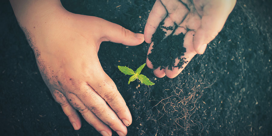 Cannabis Grow Medium