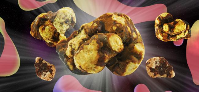 Magic Truffle Varieties