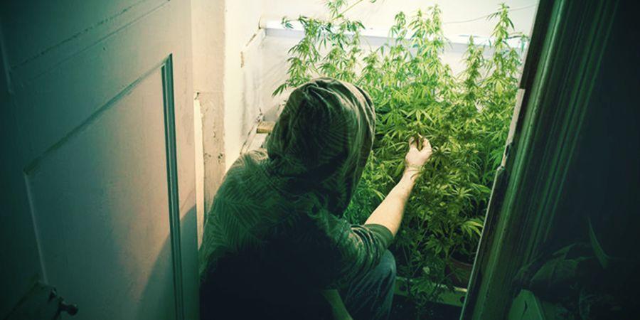 closet growing system