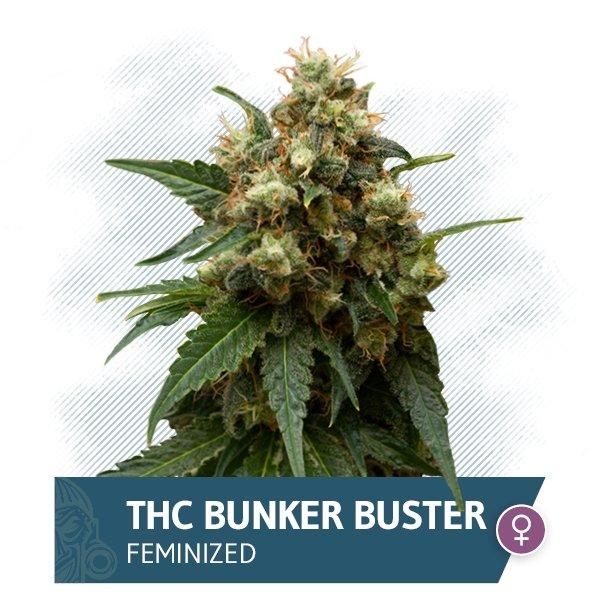 THC Bunker Buster (Zamnesia Seeds) feminized