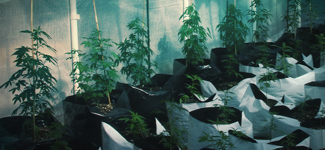WHAT'S SO SMART ABOUT A SMART POT?