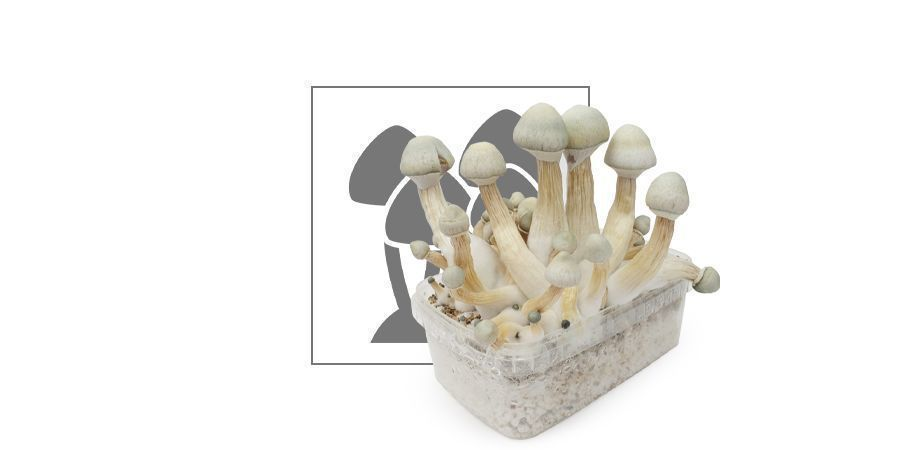 Zamnesia Grow Kit 'Treasure Coast'