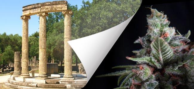 OLYMPIA (pyramid seeds)