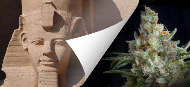 Ramses (Pyramid Seeds)