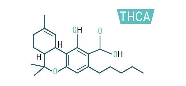 Benefits And Effects Of THCA