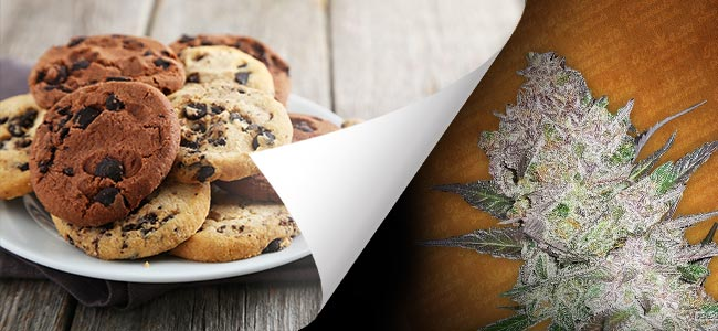 Cream Cookies (FastBuds)