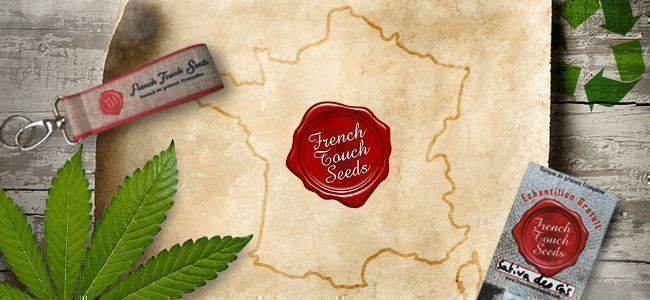 SAATGUTBANK DES MONATS: FRENCH TOUCH SEEDS