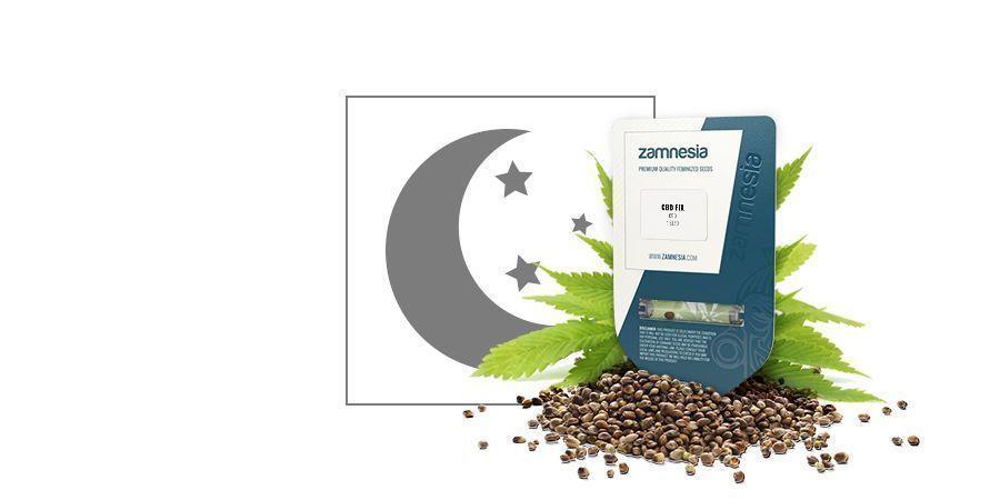 CBD Fix Automatic (Zamnesia Seeds)