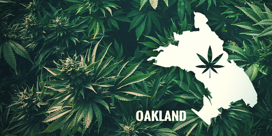 THE HISTORY BEHIND AUTO PURPLE COUSKUSH- OAKLAND