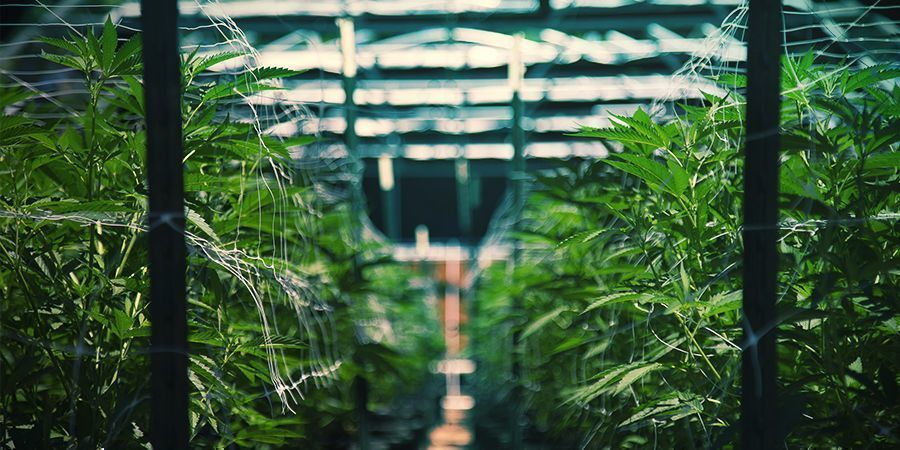 Buche Eine Marihuana-tour