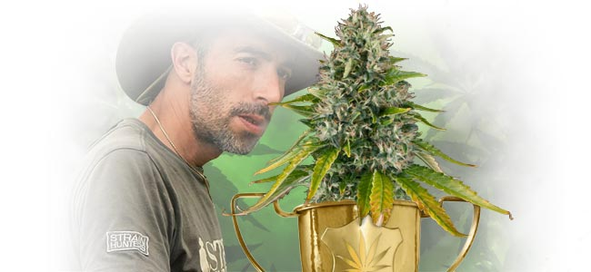 BEST CANNABIS SATIVA: THE FRANCO LOJA SPECIAL AWARD