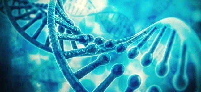 Genotype & Phenotype