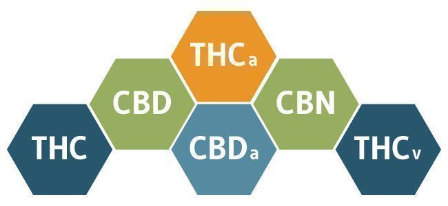 THE BIOLOGY OF CANNABIS