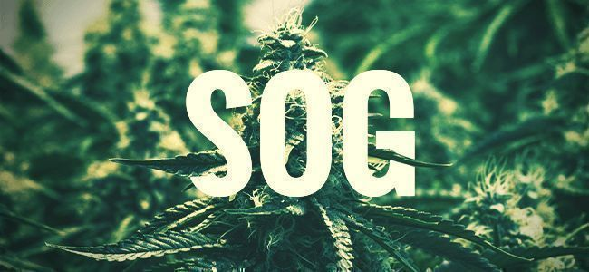 SOG — SEA OF GREEN