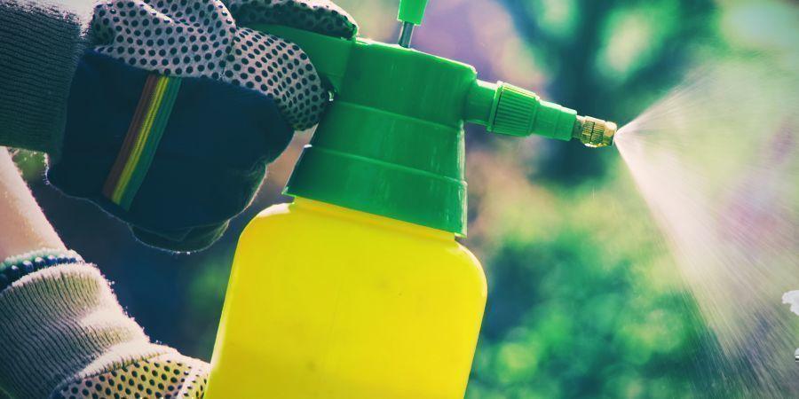 Insektizide Können Deinen Kaktus Durch Phototoxizität Beschädigen