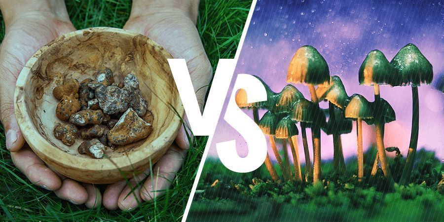 WHAT'S THE DIFFERENCE BETWEEN MAGIC TRUFFLES AND MUSHROOMS?