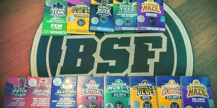 SEEDBANK OF THE MONTH: BSF SEEDS