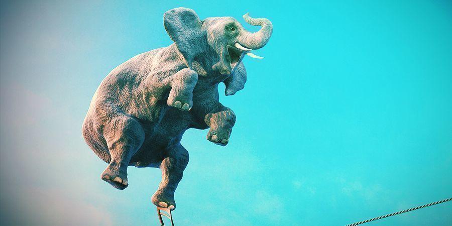 Elefanten Die Es Lieben Sich Zu Berauschen - Alkohol Und Iboga