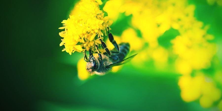 Bienen Die Es Lieben Sich Zu Berauschen - Alkohol