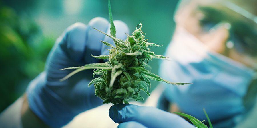 Wahrnehmung Von Cannabis