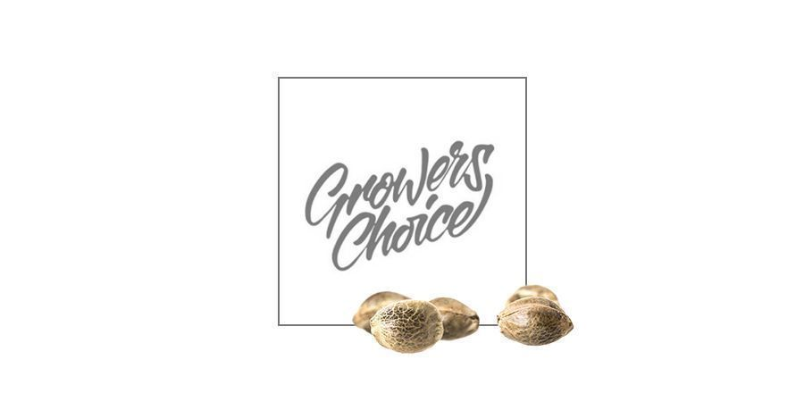 gelato growers choice