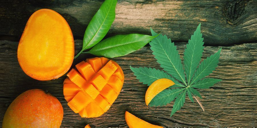 Take Your Cannabis With A Side Of Mangoes