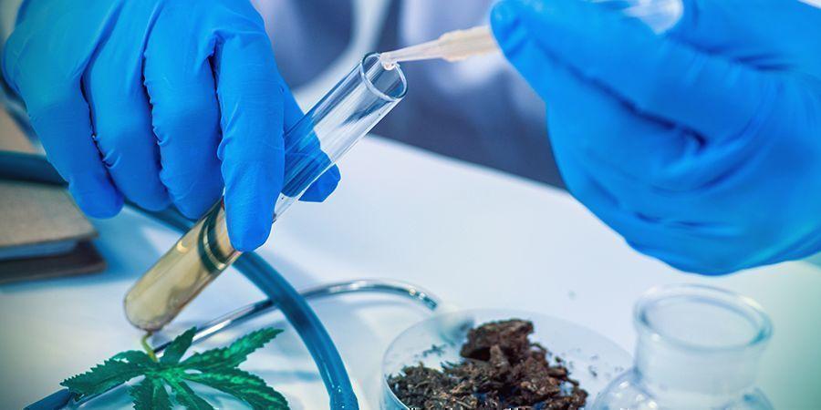 THC: Eine Potente, Natürliche Medizin