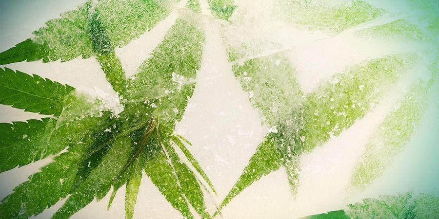 Schockgefrostetes Cannabis